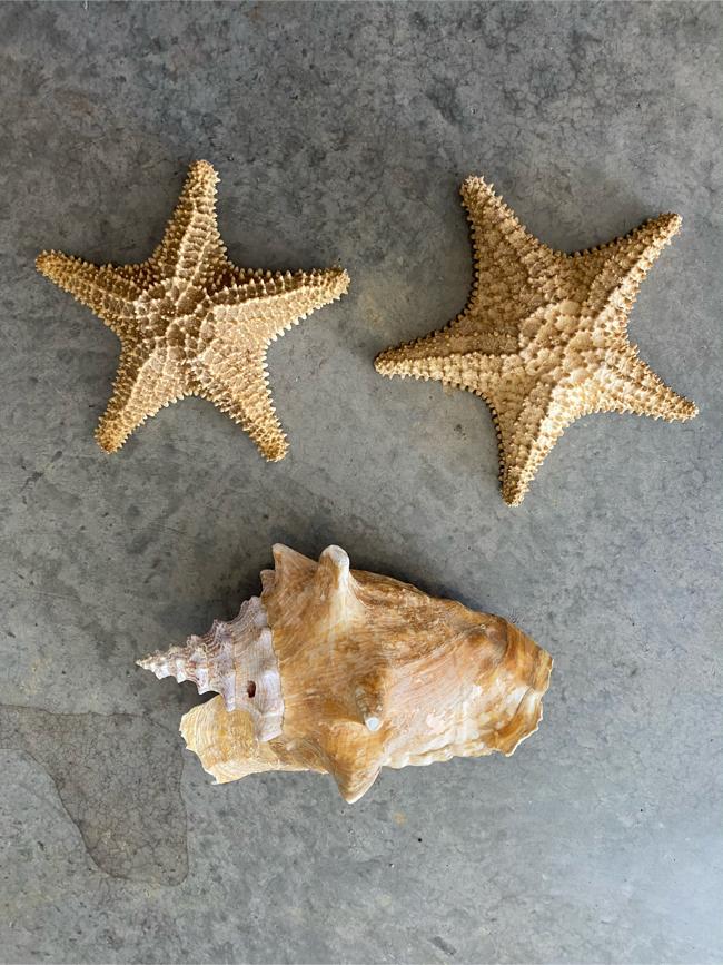 Photo Home decor star fish and sea she
